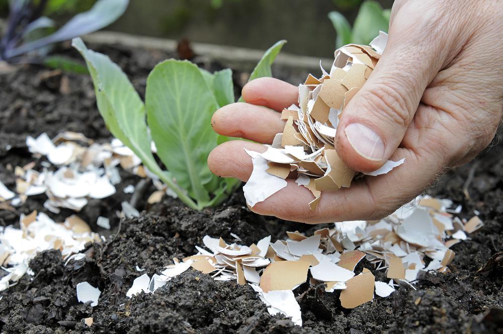 Slakken in de tuin bestrijden met eierschalen