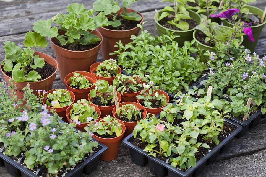Kleine planten kopen