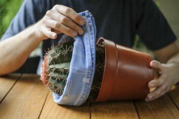 Afbeelding voor Cactus verpotten: zo voorkom je stekels in je vingers