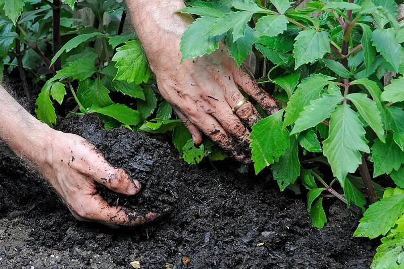 mulchen vaste planten