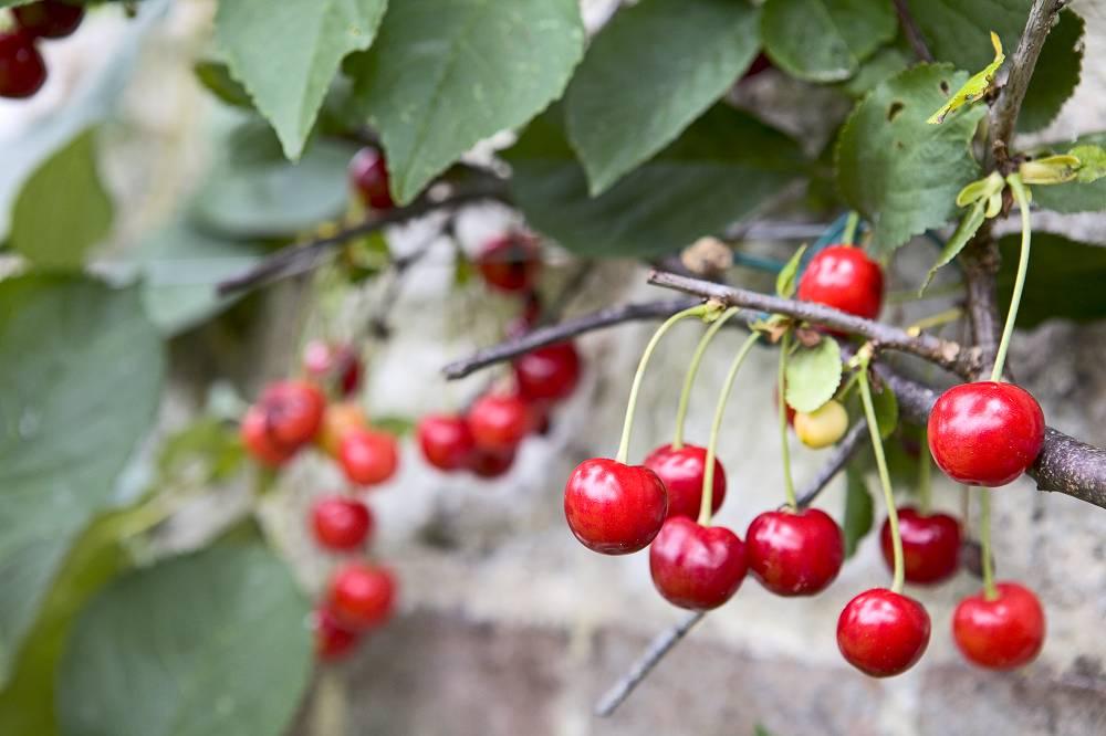 Fruit kweken op balkon