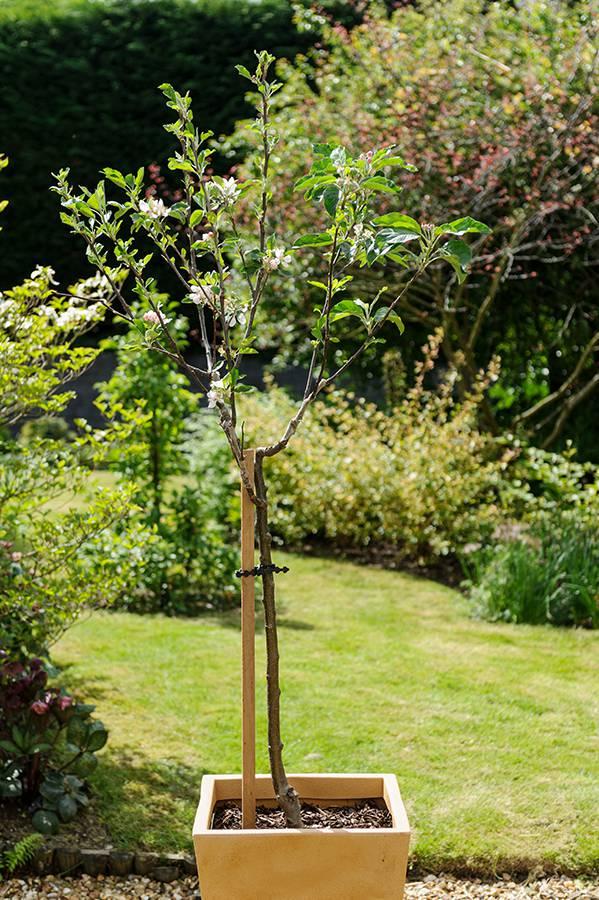 Mini fruitbomen
