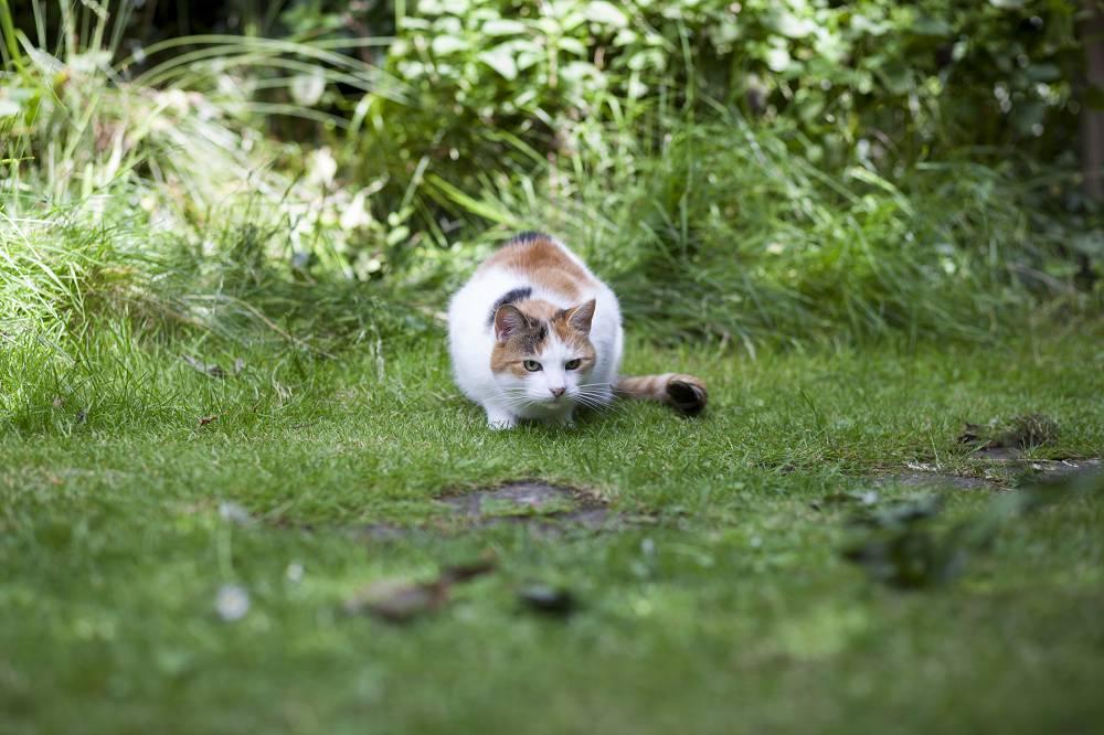 Ketten verjagen uit de tuin