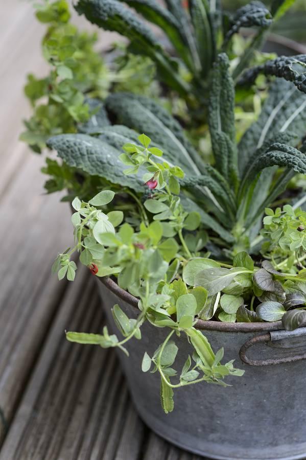 Kool planten in bakken