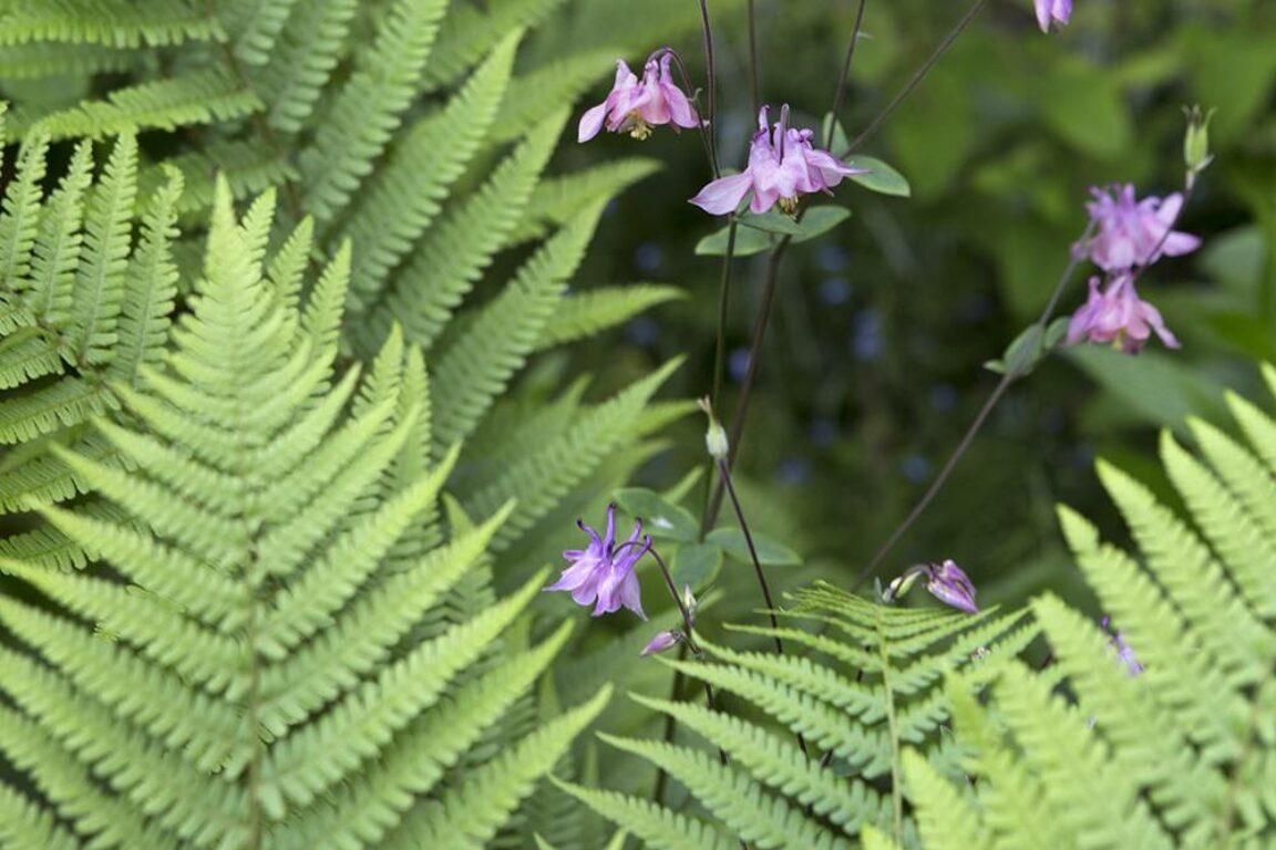 Planten voor in de schaduw