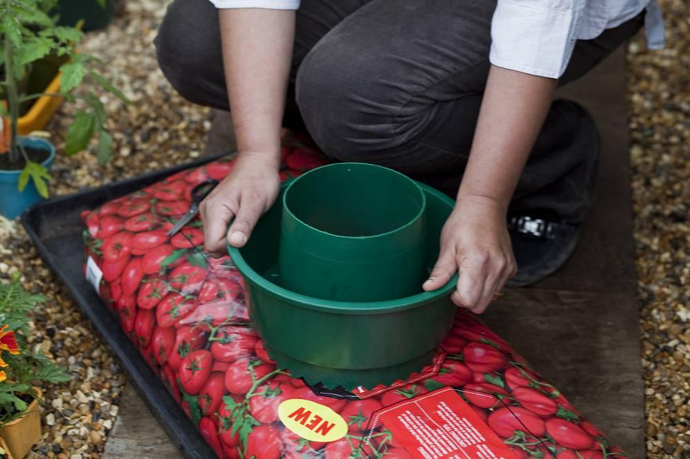 Tomaten kweken: stap voor stap