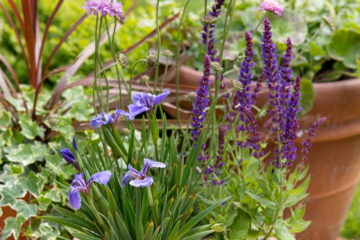 Vaste planten in bloembakken