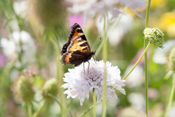 Vlindertuin maken