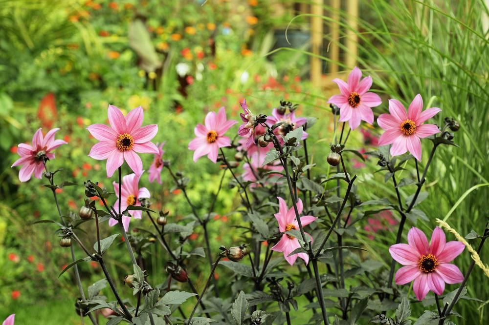 checklist voor de tuin week 29