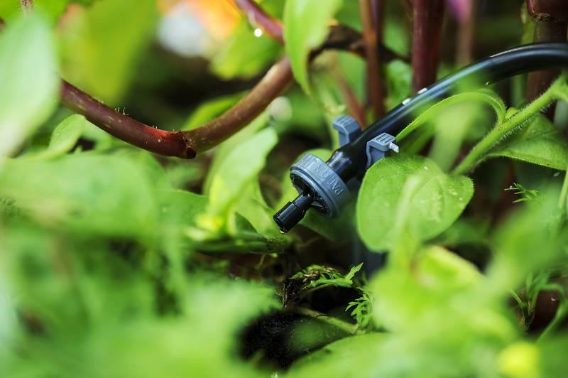 druppelirrigatie tuin