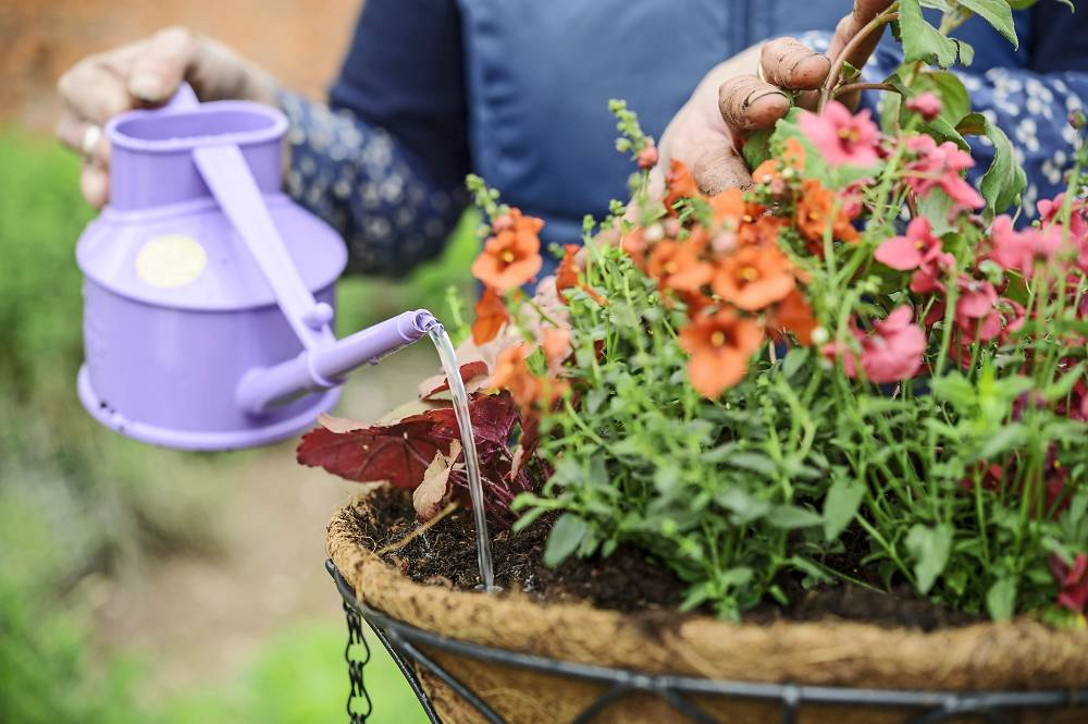 hanging basket met bloemen