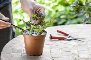stekken van planten