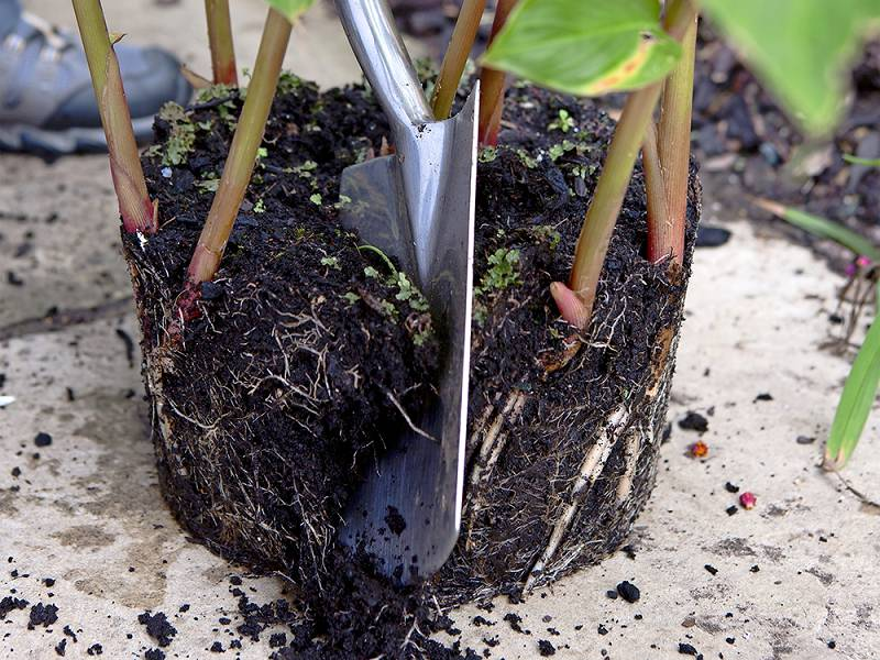 tropische tuin planten