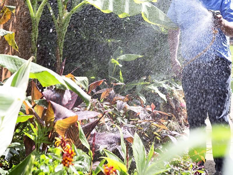 tropische tuin ontwerpen