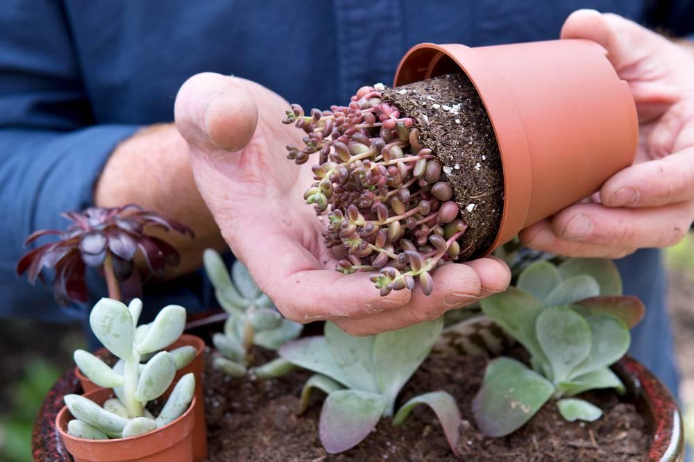 vetplanten verpotten