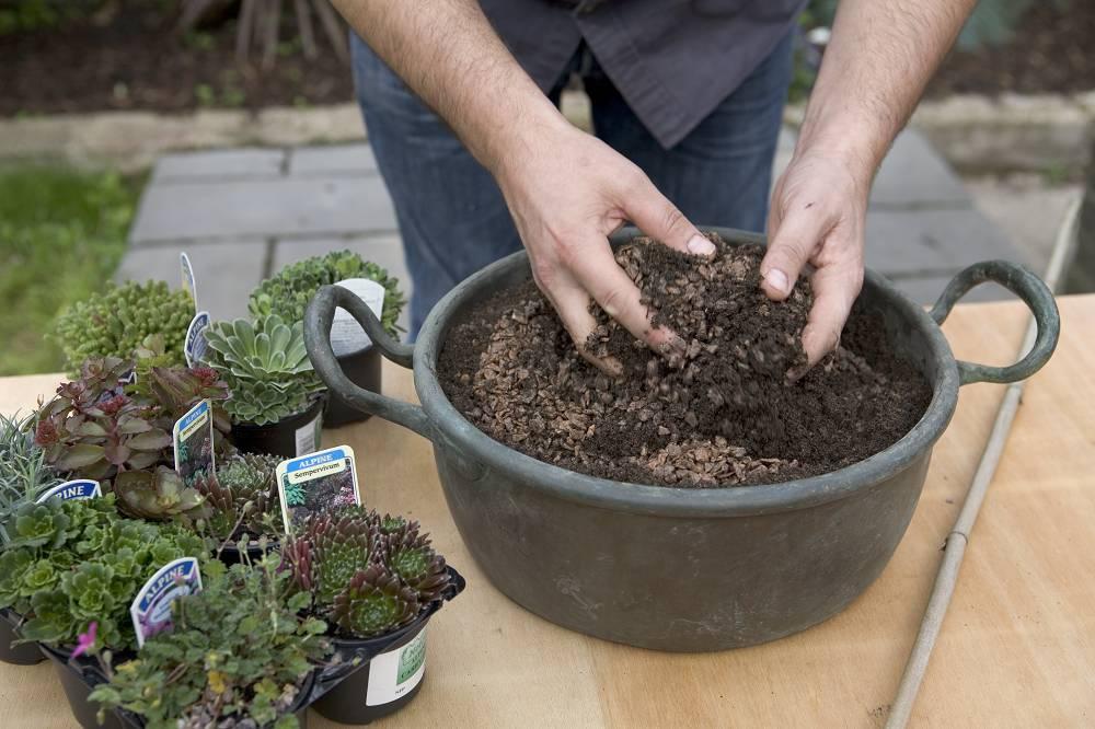 potgrond voor vetplanten