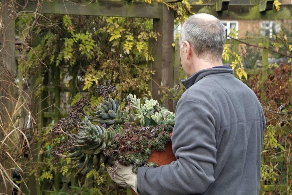 vetplanten buiten winterhard