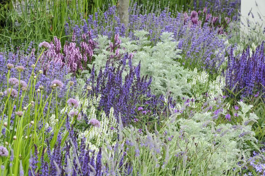 Lavendel combineren