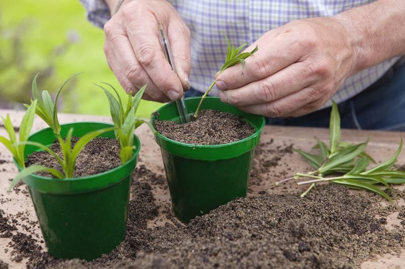 checklist voor de tuin week 31