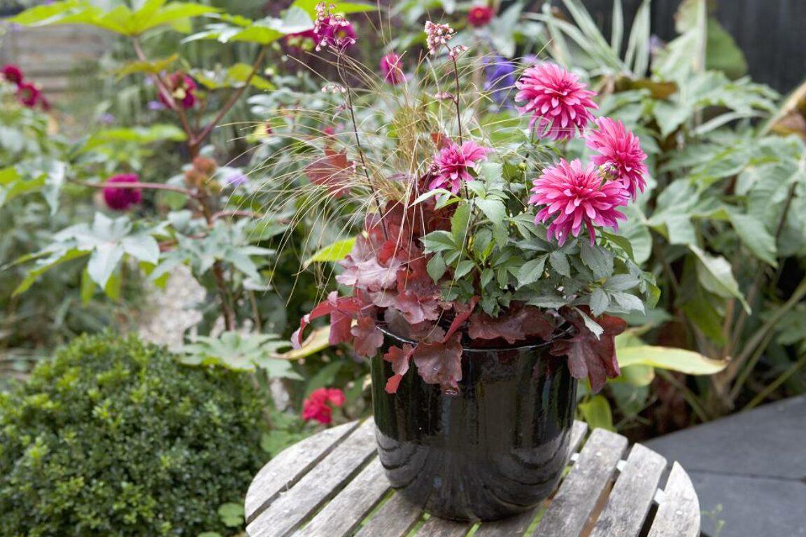 tuin in augustus