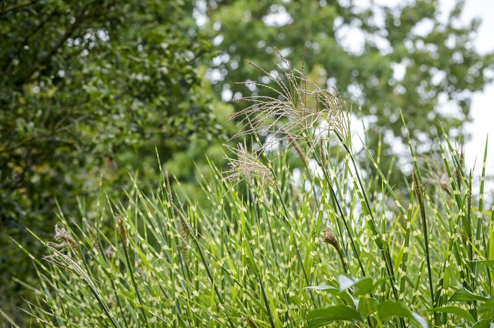 grassen tuin