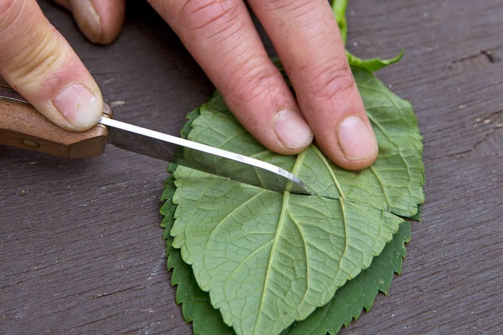 grote bladeren doorsnijden