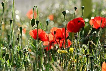 bloemen zaaien in september