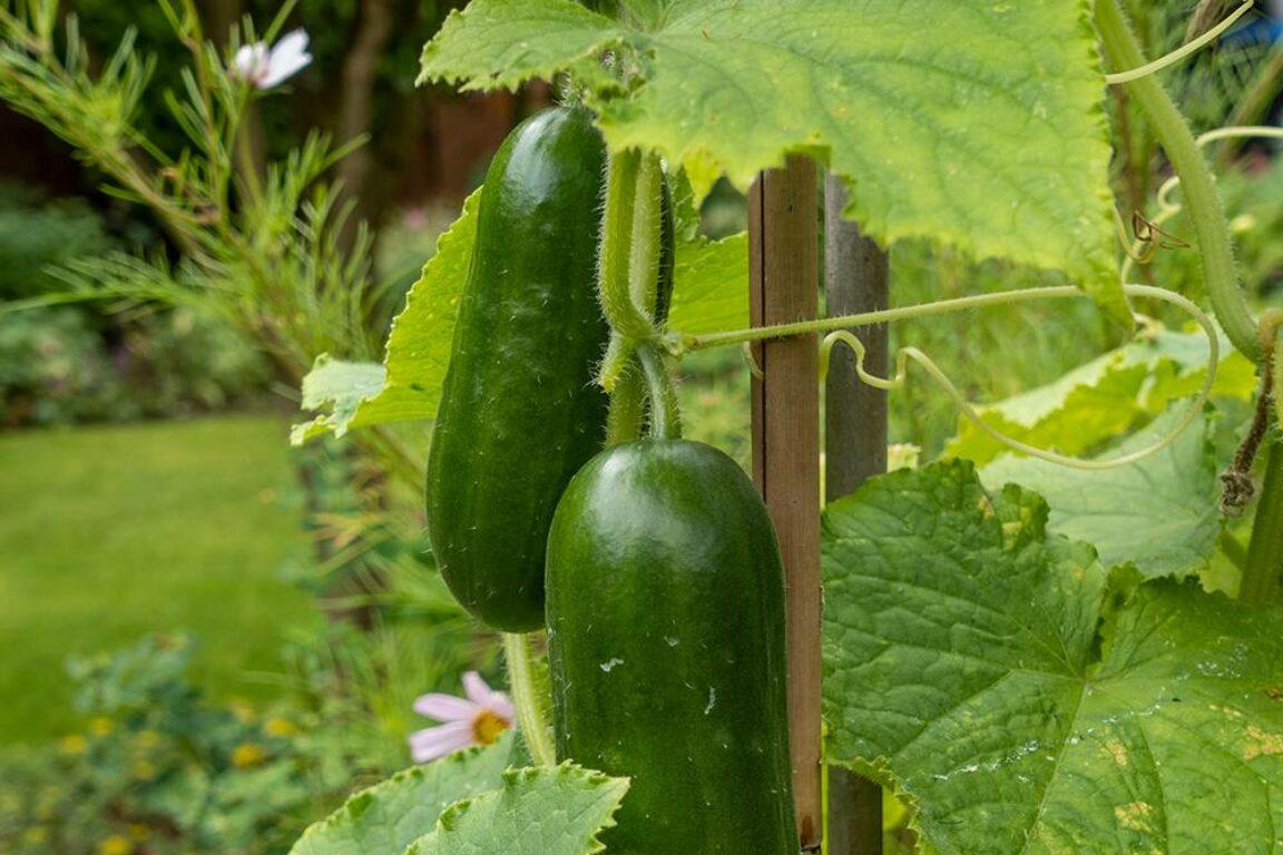checklist voor de tuin week 34