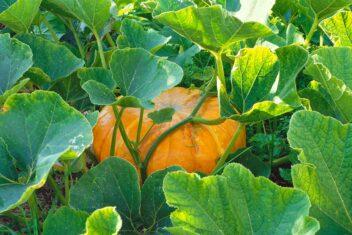 checklist voor de tuin week 35