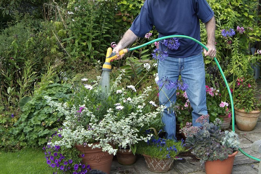 checklist voor de tuin week 32