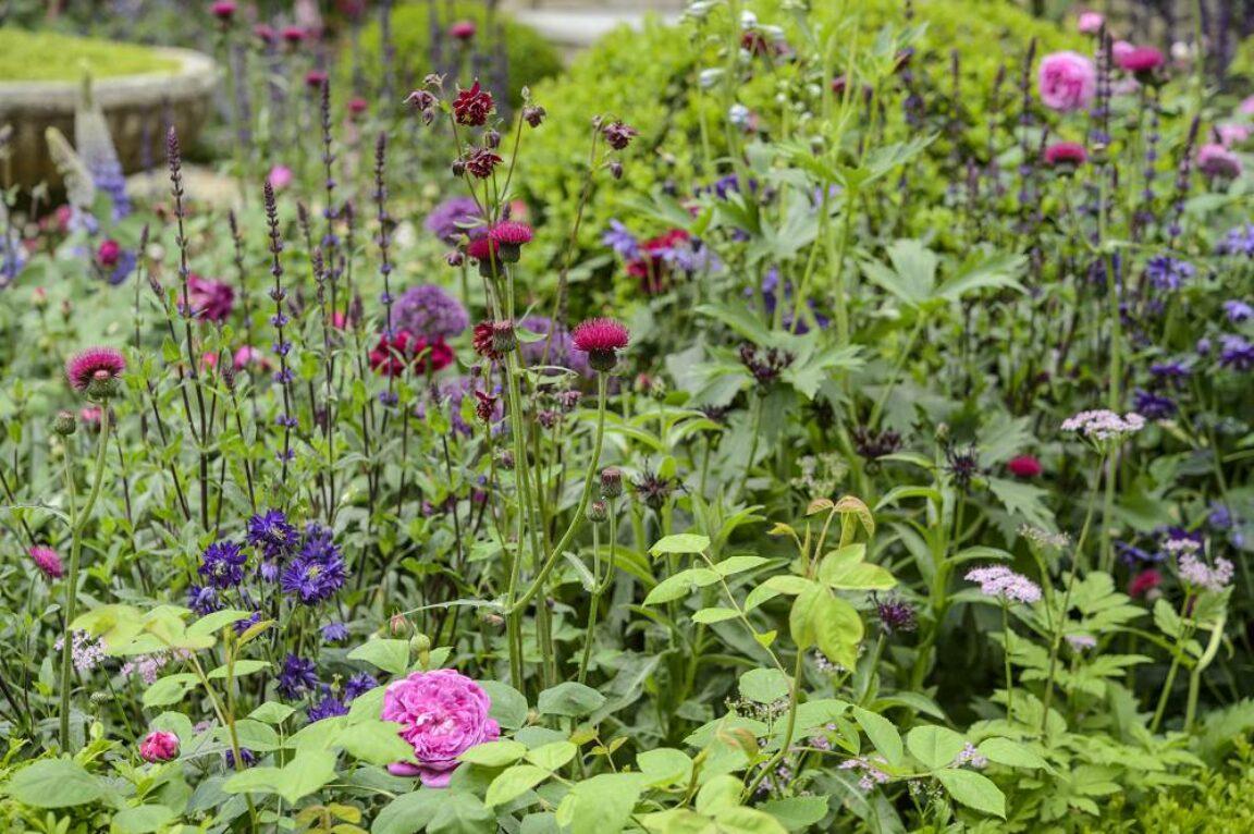 wilde planten in de tuin