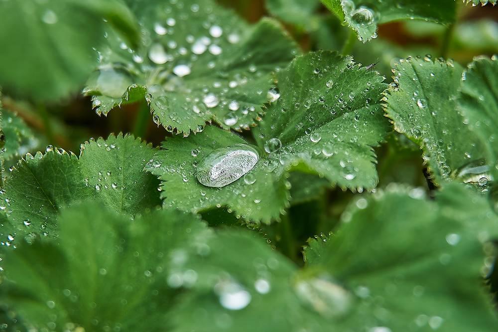 planten die zichzelf uitzaaien