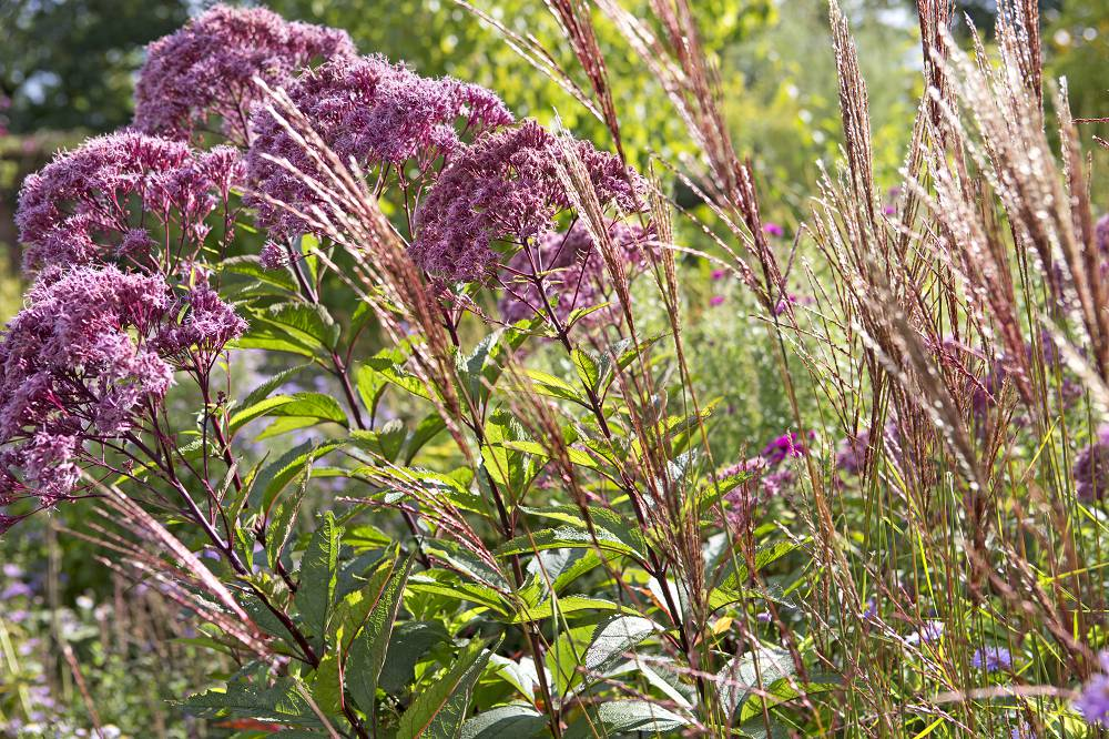 bloeiende planten september