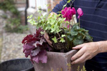 checklist voor de tuin week 37