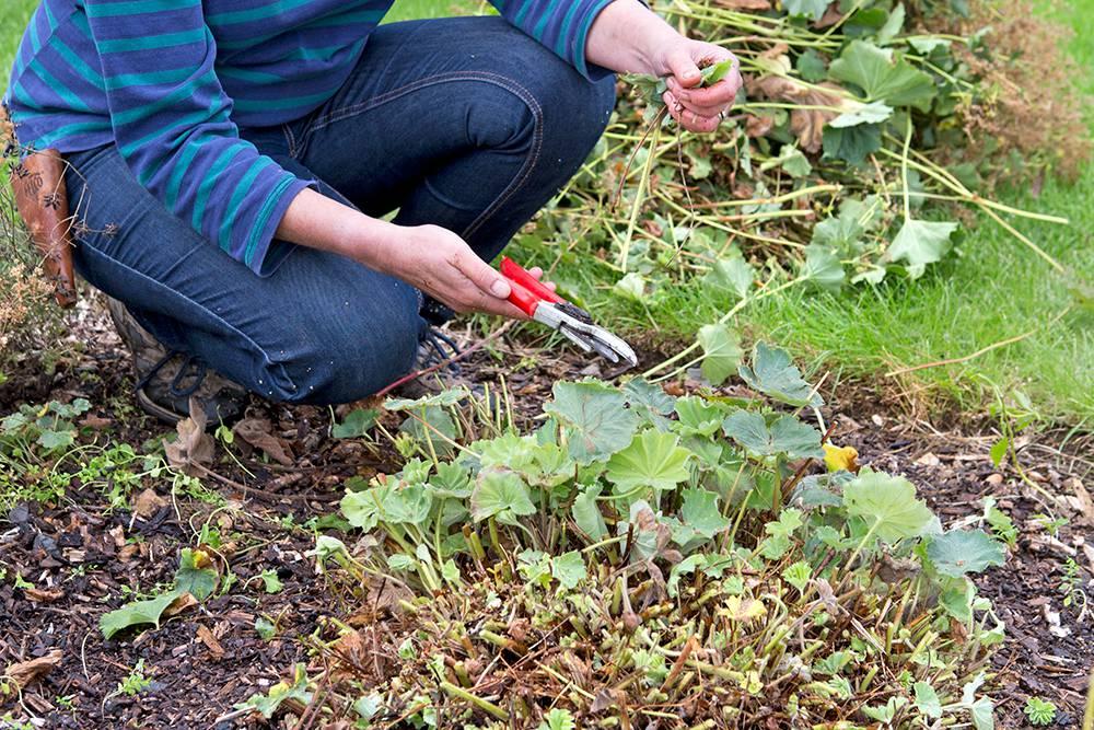 checklist voor de tuin week 40