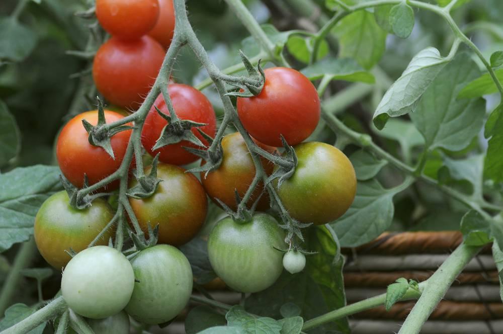 Checklist voor de tuin week 38