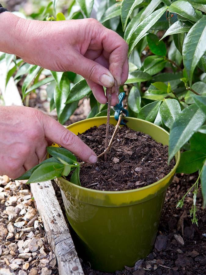 planten vermeerderen