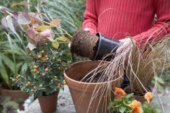herfst plantenbakken vullen